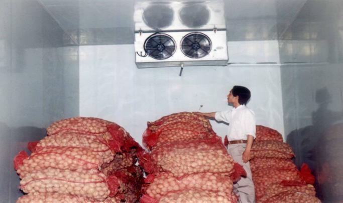 Kho lạnh bảo quản khoai tây cao cấp